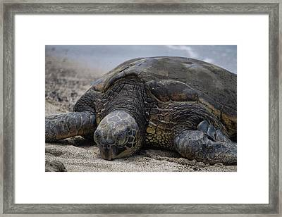 Framed Print featuring the photograph Turtle Up Close by Pamela Walton