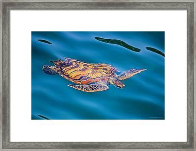 Turtle Up Framed Print
