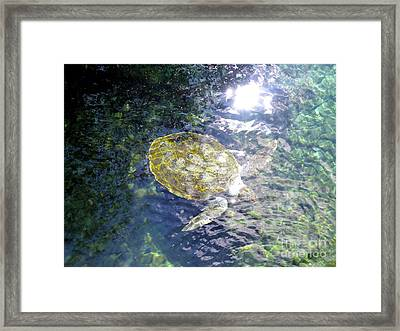 Framed Print featuring the photograph Turtle Water Glide by Francesca Mackenney