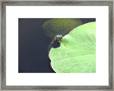 Turtle With A Fur Coat Framed Print by Rosalie Scanlon