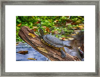 Turtle Yoga Framed Print by John Haldane