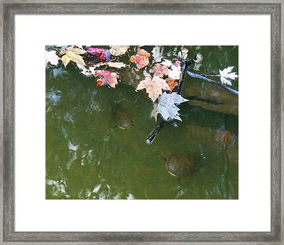 Framed Print featuring the photograph Turtles And Leaves In The Water by Irina Sztukowski