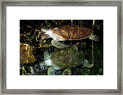 Turtles Framed Print by Angela Murray