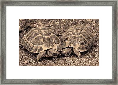 Turtles Pair Framed Print by Gina Dsgn