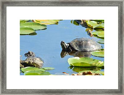 Turtling Turtle Framed Print