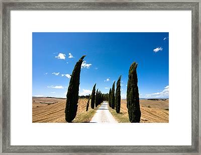 Tuscan Cypress Landscape Framed Print