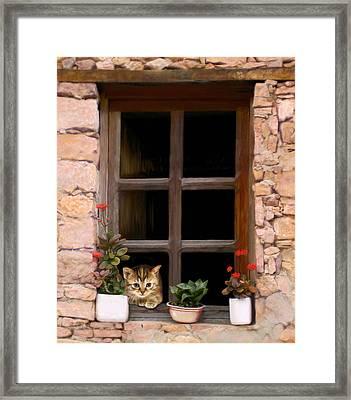 Tuscan Kitten In The Window Framed Print