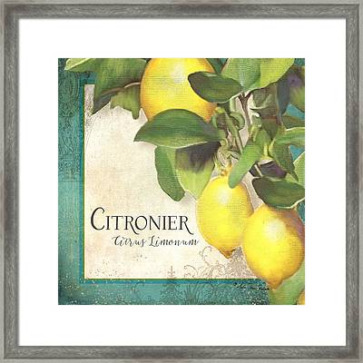 Tuscan Lemon Tree - Citronier Citrus Limonum Vintage Style Framed Print by Audrey Jeanne Roberts