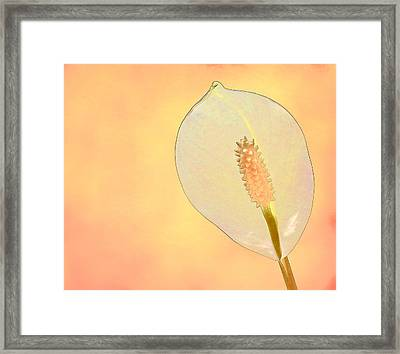 Tuscan Lily 2 Framed Print by Michael Taggart II