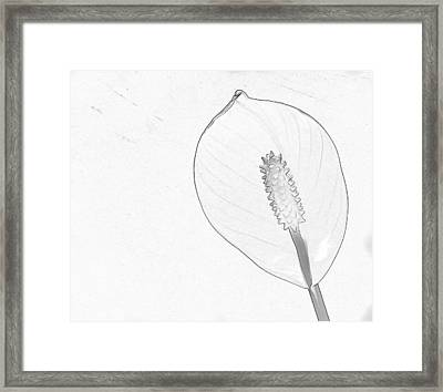 Tuscan Lily 3 Framed Print by Michael Taggart II
