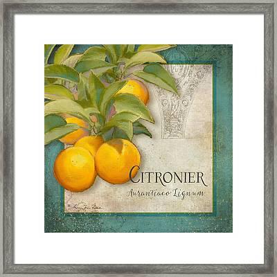 Tuscan Orange Tree - Citronier Aurantiaco Lignum Vintage Framed Print by Audrey Jeanne Roberts