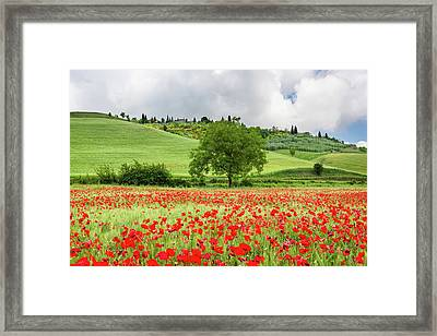 Tuscan Poppies Framed Print by Michael Blanchette