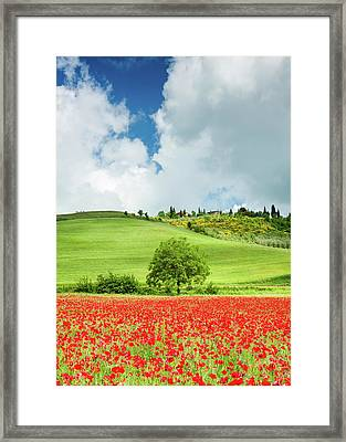 Tuscan Poppies - Vertical Framed Print by Michael Blanchette