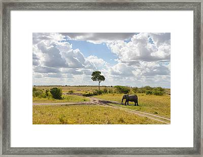 Tusker Scape Framed Print