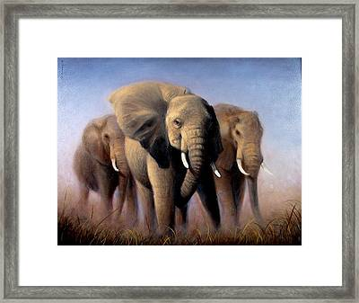 Tusks Framed Print by Donelli  DiMaria