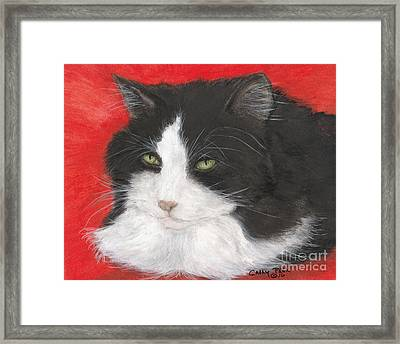 Tuxedo Cat Animal Pets Lazing Portrait Framed Print