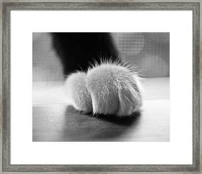 Tuxedo Cat Paw Black And White Framed Print