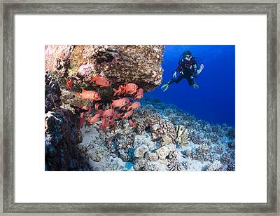 Twelve Year Old Junior Certified Scuba Framed Print by Dave Fleetham