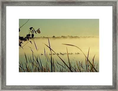 Twenty Geese On Loughborough Lake Framed Print