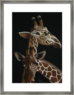 Twiga Framed Print by Amanda Clark