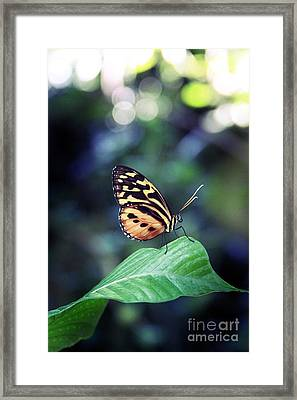 Twigs And Blooms Framed Print by Amanda Wimsatt