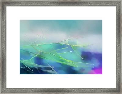 Twigs In Blue Framed Print