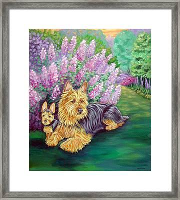 Twilight - Australian Terrier Framed Print