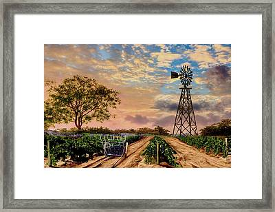 Twilight At The Vineyard Framed Print by Ron Chambers