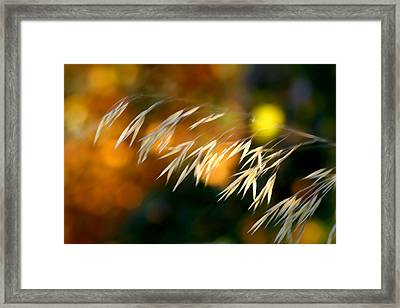 Twilight Glow Framed Print