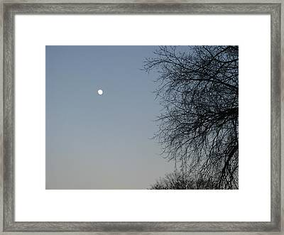 Twilight Framed Print by Hasani Blue