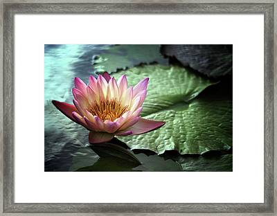 Twilight Lily Framed Print by Jessica Jenney