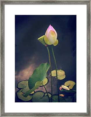 Twilight Lotus Pond Framed Print