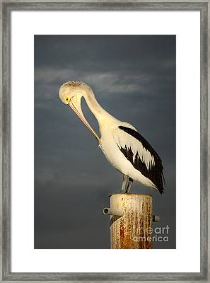 Twilight Framed Print by Marion Cullen