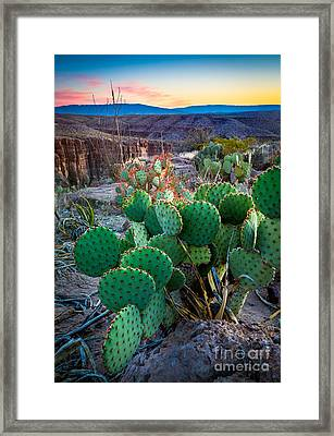 Twilight Prickly Pear Framed Print by Inge Johnsson