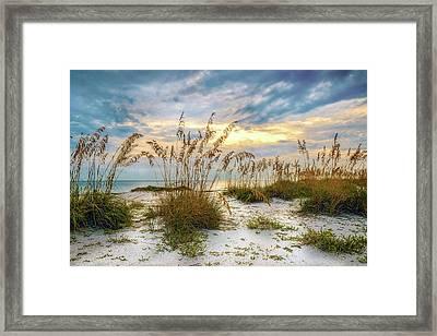 Twilight Sea Oats Framed Print by Steven Sparks