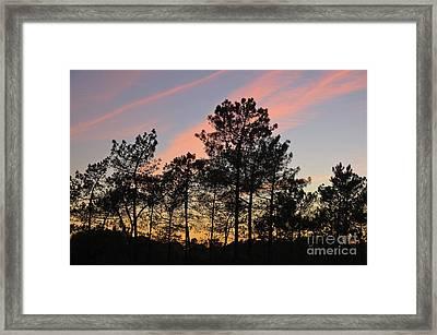 Twilight Tree Silhouettes Framed Print