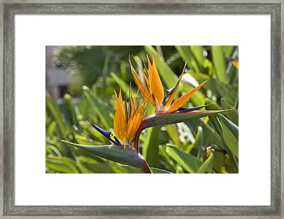 Twin Birds Framed Print