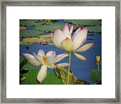 Framed Print featuring the photograph Twin Blooms by Robert Pilkington