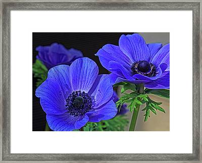Framed Print featuring the photograph Twin Blue by Robert Pilkington