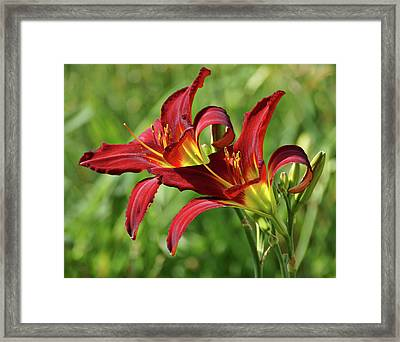 Twin Daylilies Framed Print