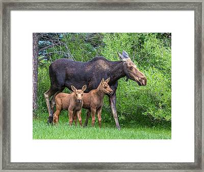 Twin Gifts  Framed Print
