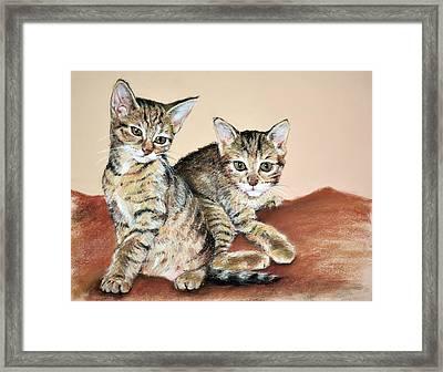 Twin Kittens Framed Print
