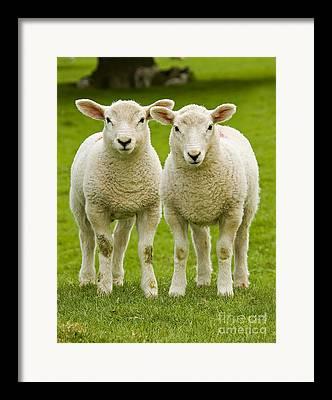 Woolly Framed Prints