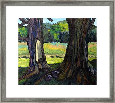 Twin Maples Framed Print by Phil Chadwick