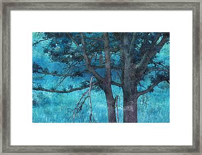 Twin Oaks Framed Print by Bonnie Bruno