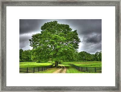 Twin Oaks Drive Southern Living Framed Print by Reid Callaway