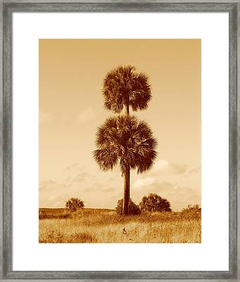 Framed Print featuring the photograph Twin Palms by Peg Urban