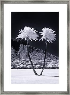 Twin Palms Framed Print by Sean Davey