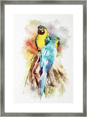 Twin Parrots Framed Print