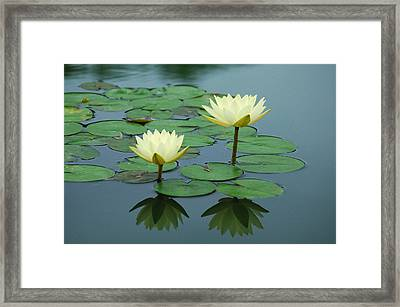 Twin Reflections Framed Print
